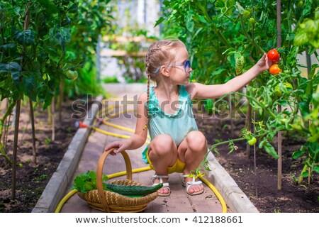 女の子 · 玉葱 · 温室 · 花 · バラ - ストックフォト © travnikovstudio