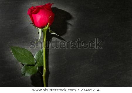 Сток-фото: Red Rose Macro Over Dark Black Wood