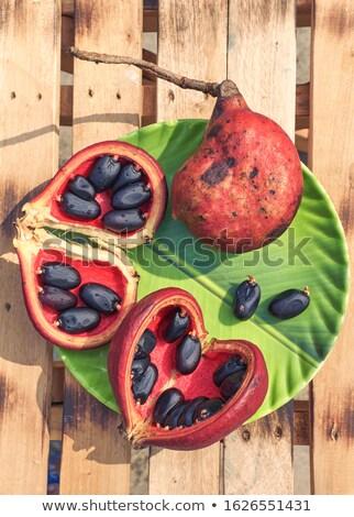 семян · гайка · тропические · субтропический · нефть - Сток-фото © bdspn