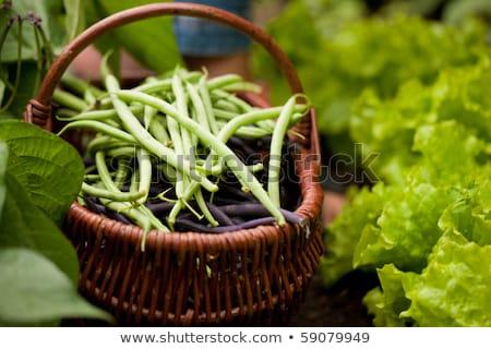 Vrouw oogst string bonen tuin voeten Stockfoto © Kzenon