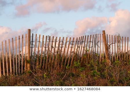 Wooden fence on sandy beach Stock photo © stevanovicigor