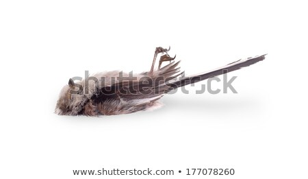 deceased long tailed tit stock photo © michaklootwijk
