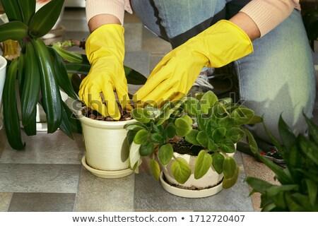 Yellow Gloves Stock photo © Aitormmfoto