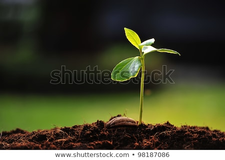 young green plant on soil stock photo © tashatuvango