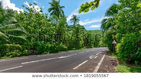 estrada · coco · palms · ilha · francês · polinésia - foto stock © danielbarquero