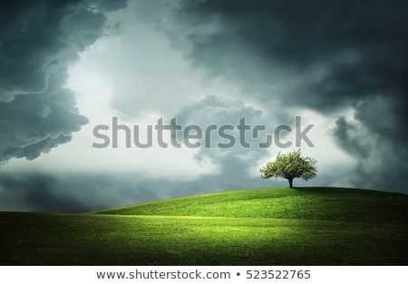 clouds over field with lone tree stock photo © bessi