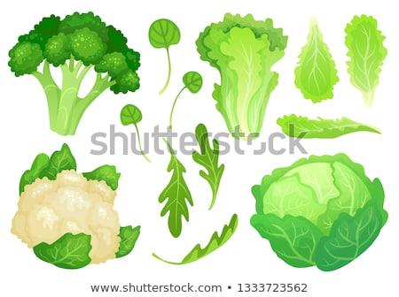 Head of farm fresh healthy green broccoli Stock photo © ozgur