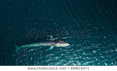baleia · barbatana · fora · água · natureza · mar - foto stock © hofmeester