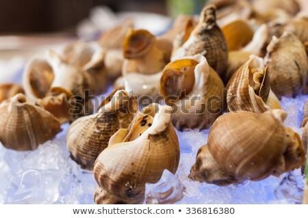 Veined rapa whelk on white background Stock photo © BSANI