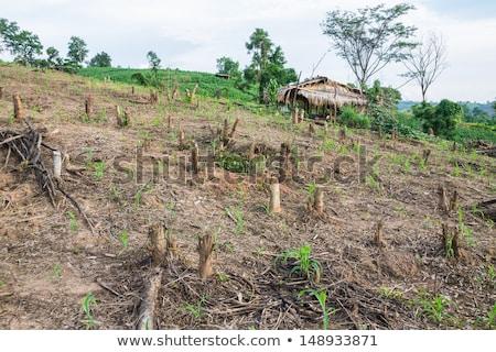Filipinler gökyüzü doğa tarım kirlenme hava durumu Stok fotoğraf © fazon1