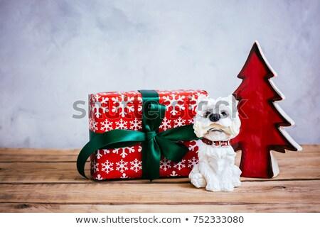 Köpek yalıtılmış beyaz gözler model Retro Stok fotoğraf © GeniusKp