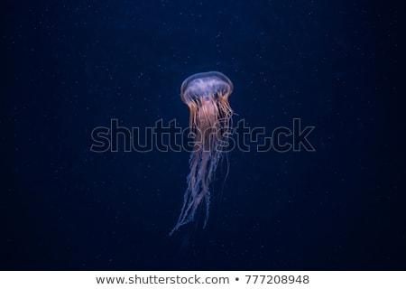 Gelée profonde bleu océan belle Photo stock © meinzahn