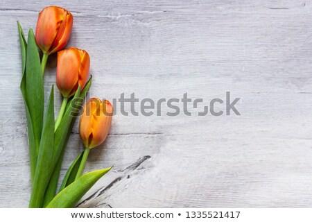 giallo · tulipani · crescita · verde · argilla · foglia - foto d'archivio © simply