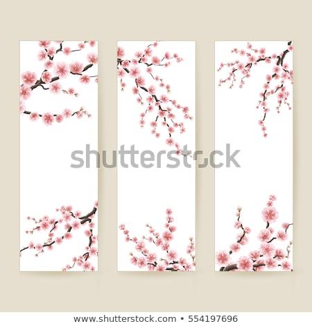 Kersenbloesem kaart eps 10 Stockfoto © beholdereye