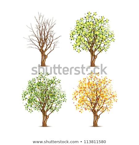 четыре · различный · деревья · иллюстрация · лист · фон - Сток-фото © bluering
