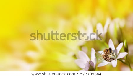 working bee on flower stock photo © 5xinc