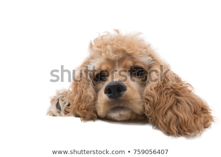 close up a cute dog daydreaming while lying down stock photo © ozgur