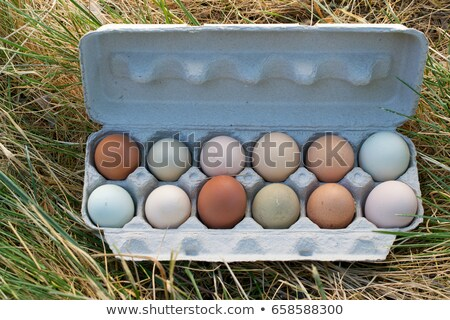 Carton of colourful eggs Stock photo © IS2
