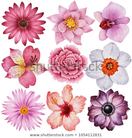 set of images of different flowers stock photo © vlad_star