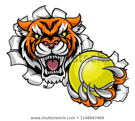 tiger holding tennis ball breaking background stock photo © krisdog