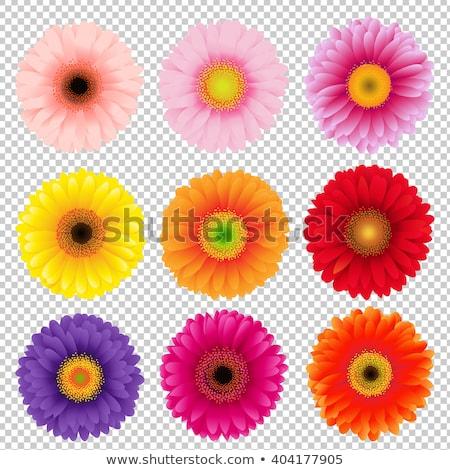 résumé · printemps · coloré · Daisy · fleurs · papillon - photo stock © adamson