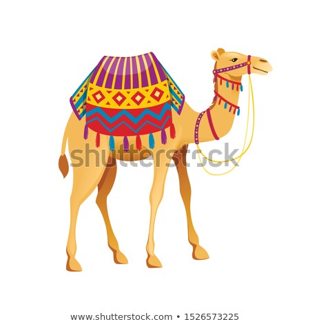 camel vector funny animal isolated flat cartoon illustration stock photo © pikepicture