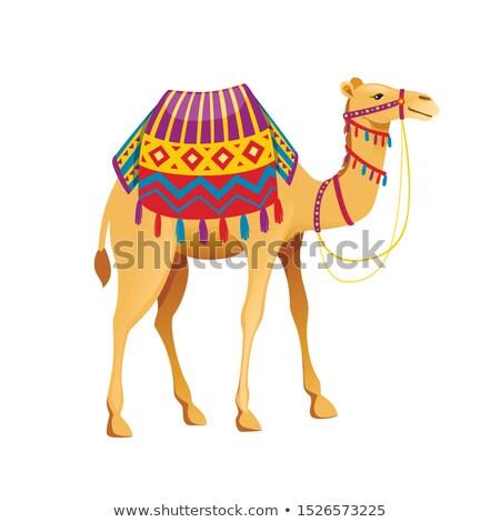 Camelo vetor engraçado animal isolado desenho animado Foto stock © pikepicture