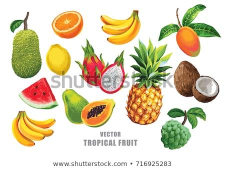 Coco exótico frutas aislado todo corte Foto stock © robuart