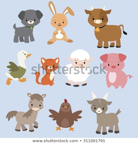 cheerful goat farm animal cartoon character Stock photo © izakowski