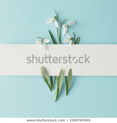 Voorjaar witte bloem witte bloemen zachte macro shot Stockfoto © vapi