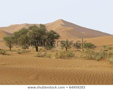Duin park Namibië hemel natuur woestijn Stockfoto © photoblueice