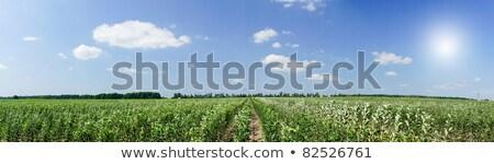 Vue jeunes verger de pommiers ciel bleu incroyable image Photo stock © lypnyk2