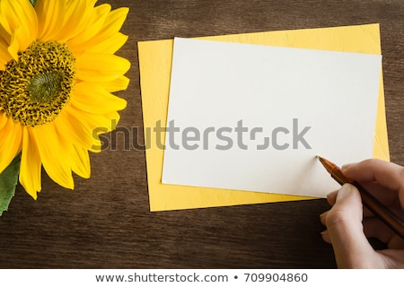 zonnebloemen · witte · vers · bloem · hoofd · Geel - stockfoto © rufous