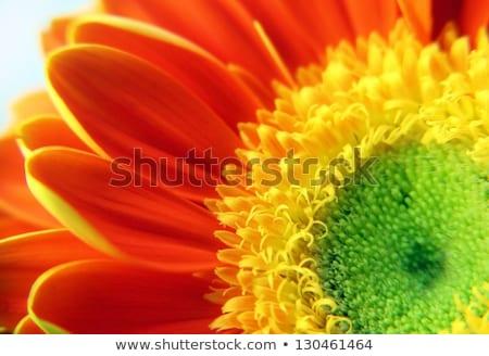 wiosenny · kwiat · bukiet · odizolowany · biały · słońce · zielone - zdjęcia stock © adamson