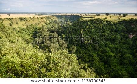 vegetation in the Queen Elizabeth National Park Stock photo © prill