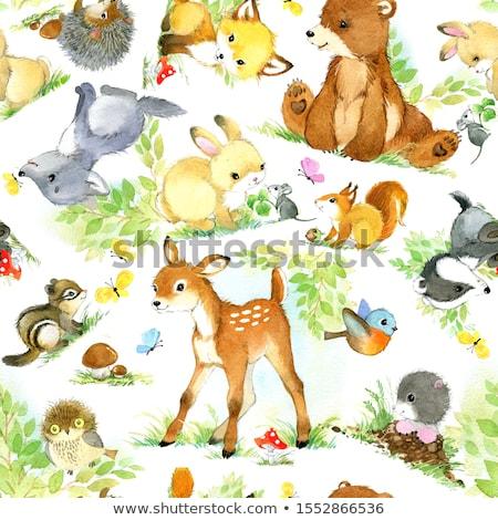 peluche · ours · isolé · blanche · bébé · enfant - photo stock © rastudio