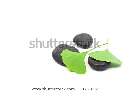Colored pebbles over white Stock photo © tilo