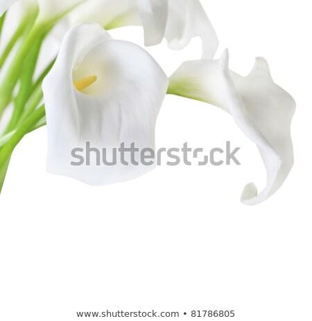 Lirios alto clave aislado blanco Foto stock © dashapetrenko