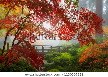 Stock fotó: Creek At Japanese Garden In The Fall