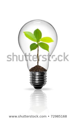 Foto stock: Eco · planta · dentro · isolado · branco