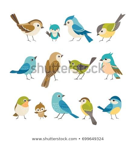 Sevimli kuşlar dizayn sanat karikatür Stok fotoğraf © indiwarm