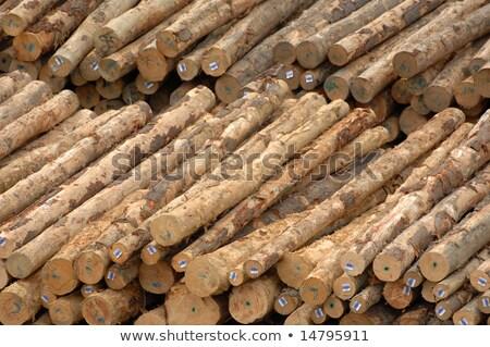 Hout molen boom industrie werken Stockfoto © Sportlibrary