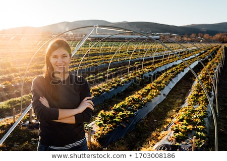 Young professional woman with groceries stock photo © christinerose81