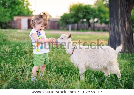 bébé · chèvre · usine · main · enfant - photo stock © oneblink