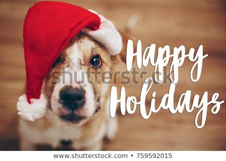 Holiday Pet Sign Stock photo © Lightsource