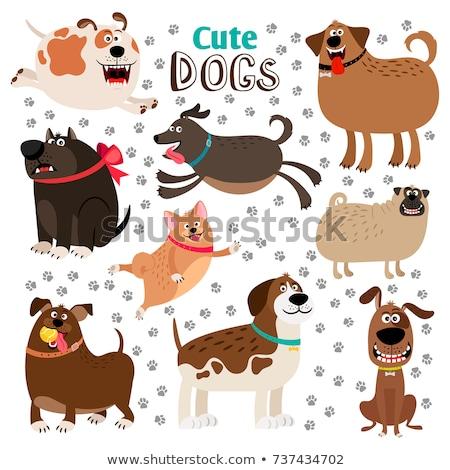 Engraçado cães conjunto voar amarelo em pé Foto stock © Genestro
