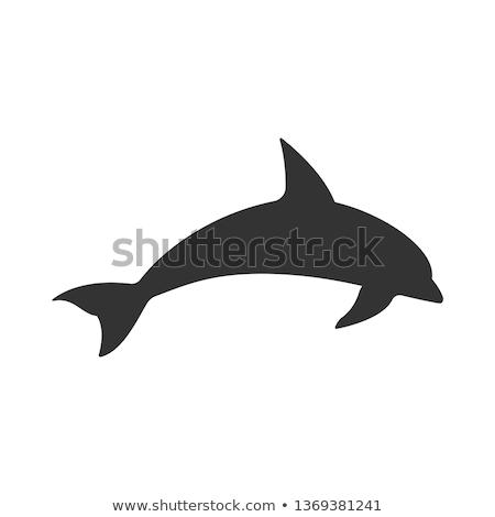 vector icon dolphin stock photo © zzve