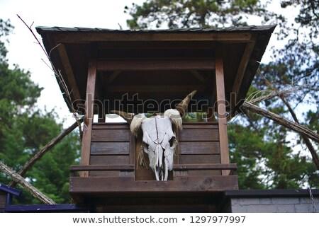 Skull cow hung on wall Stock photo © stoonn