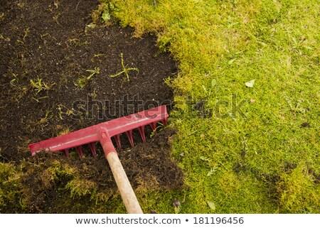 мох газона трава домой саду зеленый Сток-фото © haraldmuc