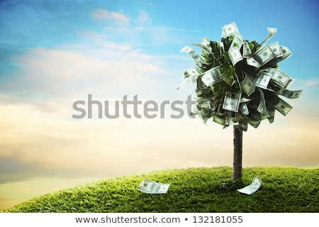 Money tree ağaç çiçekli çayır 100 Stok fotoğraf © TaiChesco